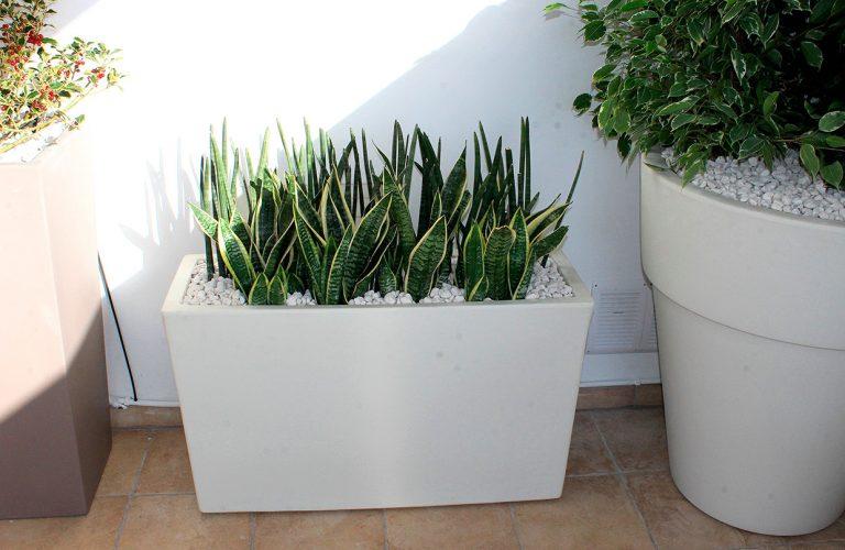 pianta_particolare