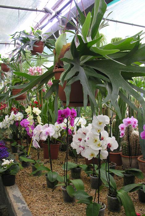 Piante da interno - Floricoltura Decataldo