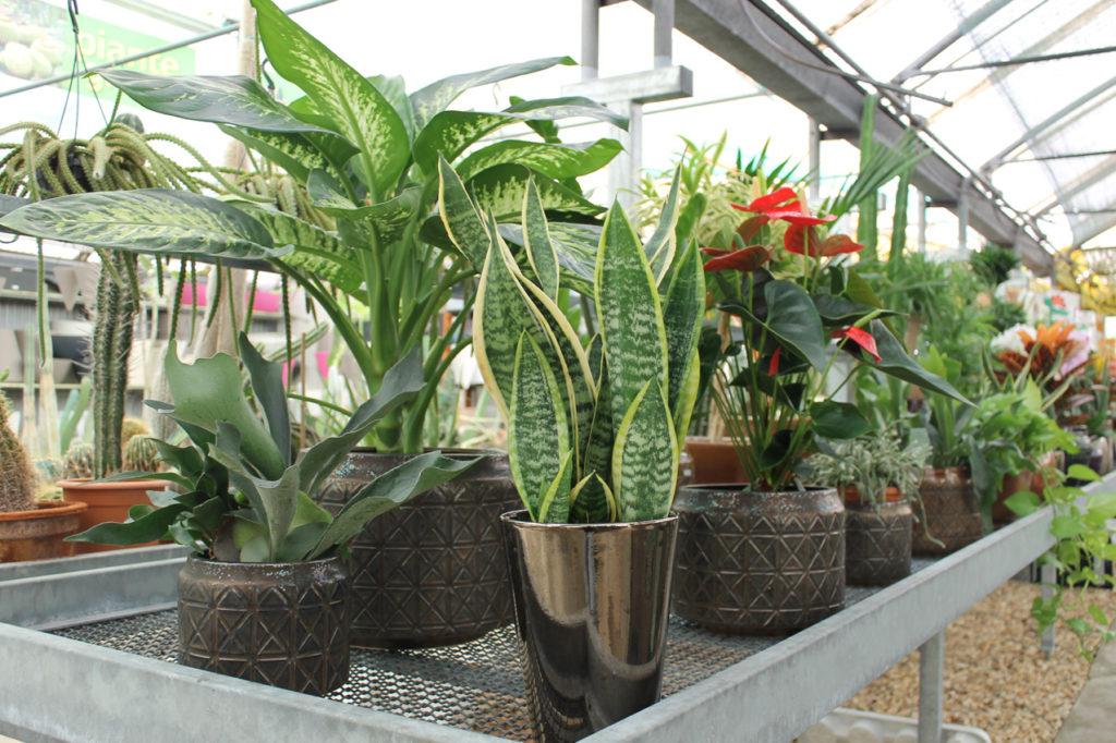 vasi e piante d arredo floricoltura decataldo